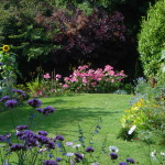 small lawn surrounded by flowers