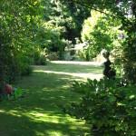 lawn in dappled sunlight