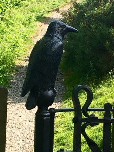 Crow on path to Castle Hill, Llangollen